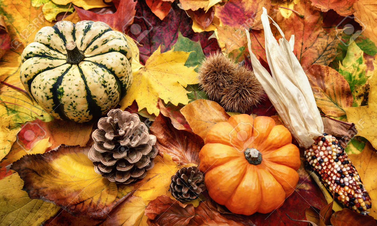 Autumn decoration arranged with natural items such as colorful dry leaves, chestnuts, ornamental pumpkins and cones - 155805922