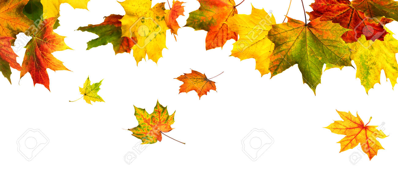 Colorful autumn leaves hanging and falling down, isolated in studio on white - 155450364