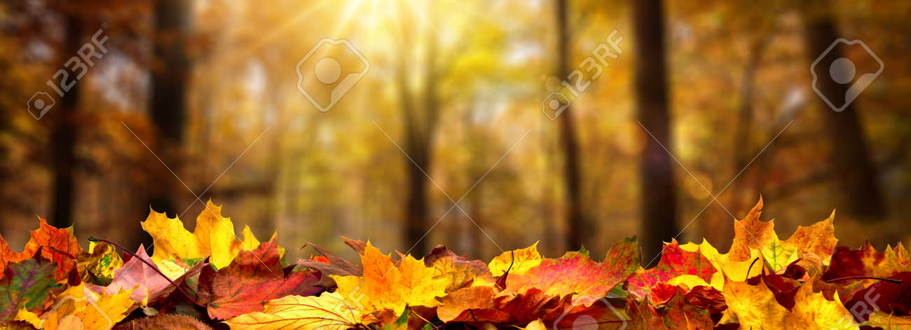 Closeup of autumn leaves on the ground in a forest, defocused trees with golden foliage and beautiful rays of sunlight in the background - 156402545