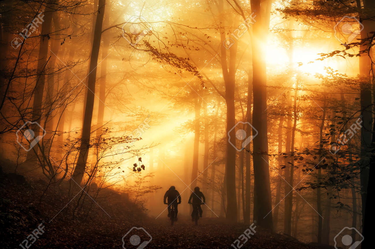 Surreal light mood in a forest, with the sun beams falling through the autumn fog and silhouettes of two people biking on a path - 156988990