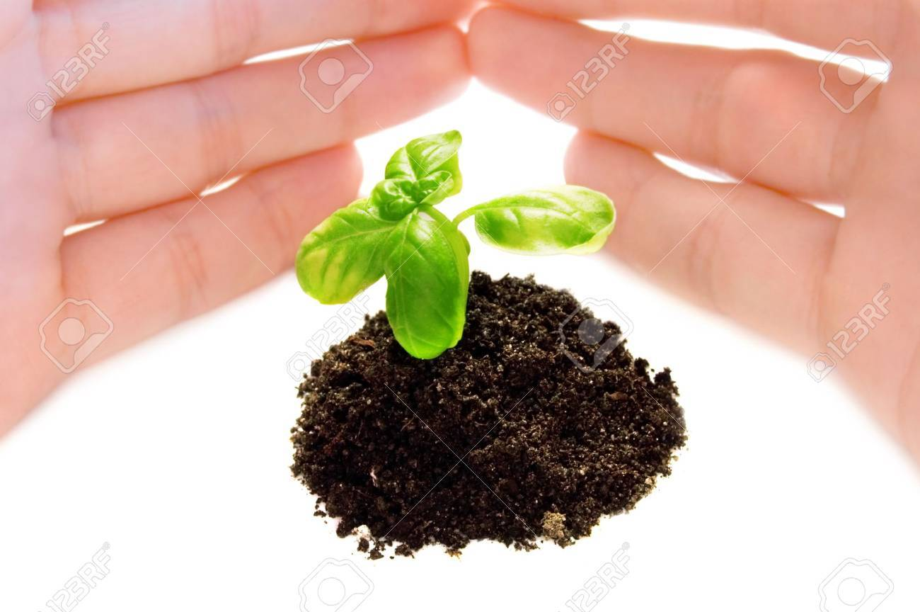 the plant and child hand Stock Photo - 3745417