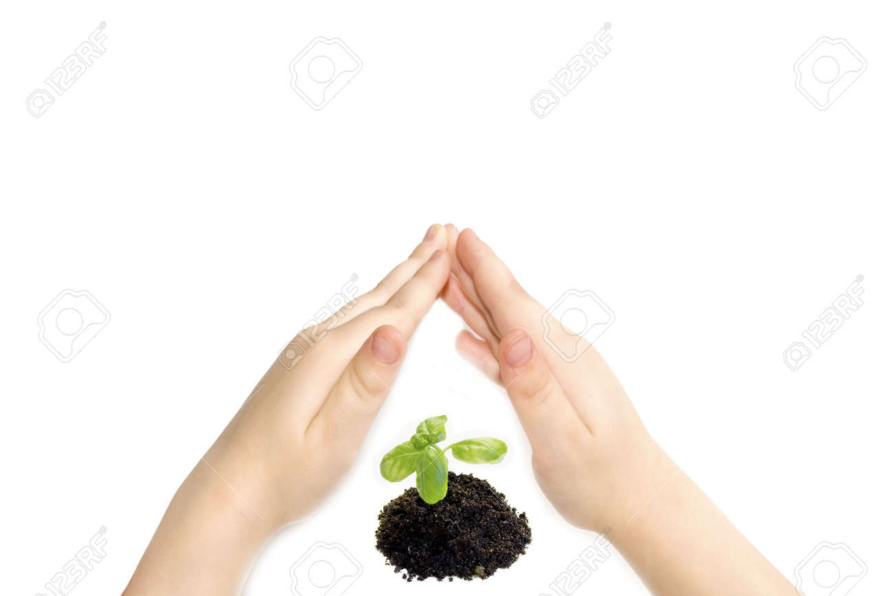 the plant and child hand Stock Photo - 3741389