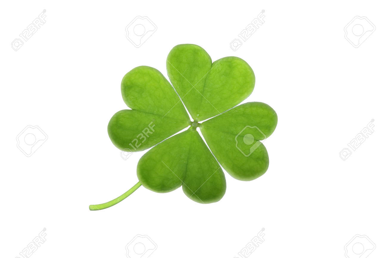 green clover isolated on white Stock Photo - 3761357