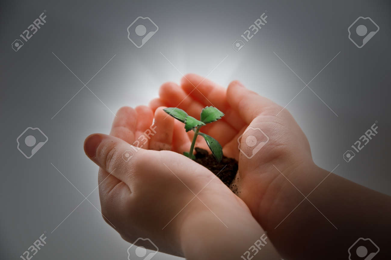 small plant and child hand Stock Photo - 4336216
