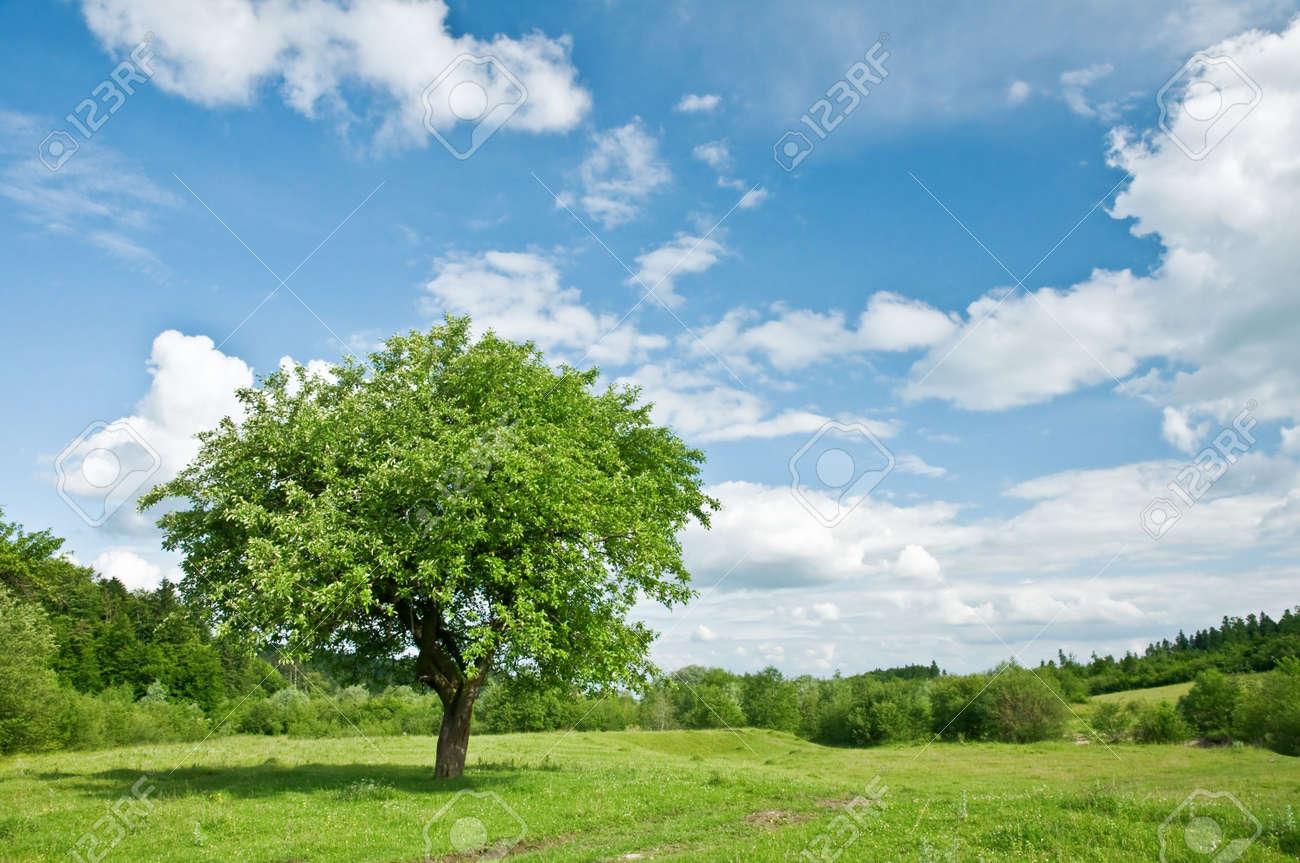 banque dimages arbre vert clair et le ciel - Arbre Ciel