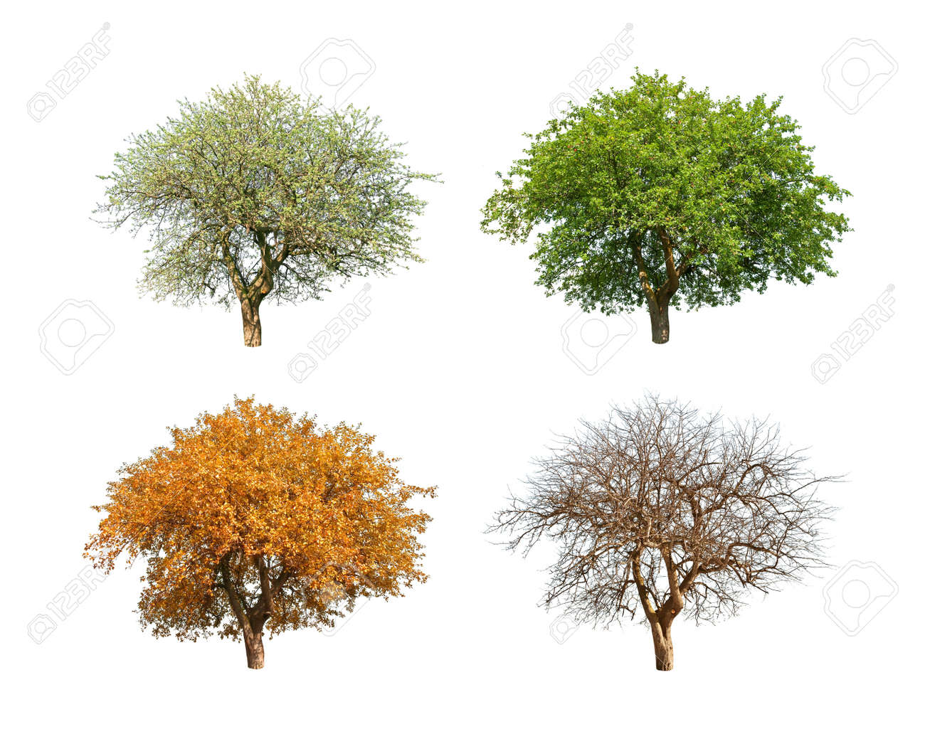 isolated tree in for season - 7922131