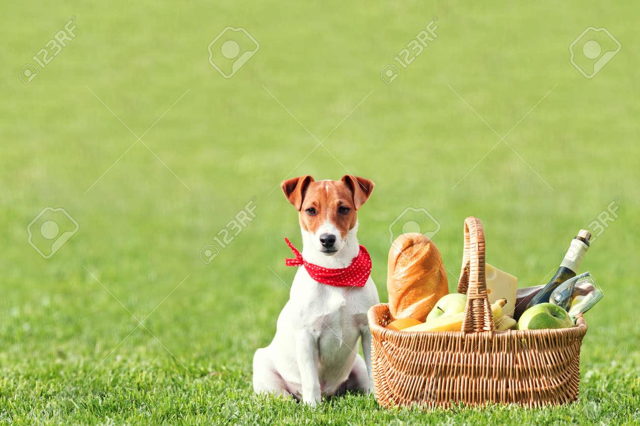 picnic basket on green lawn Standard-Bild - 18594484