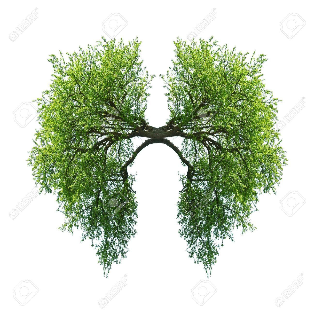 grünen Baum Lunge isoliert auf weiß Standard-Bild - 19721054