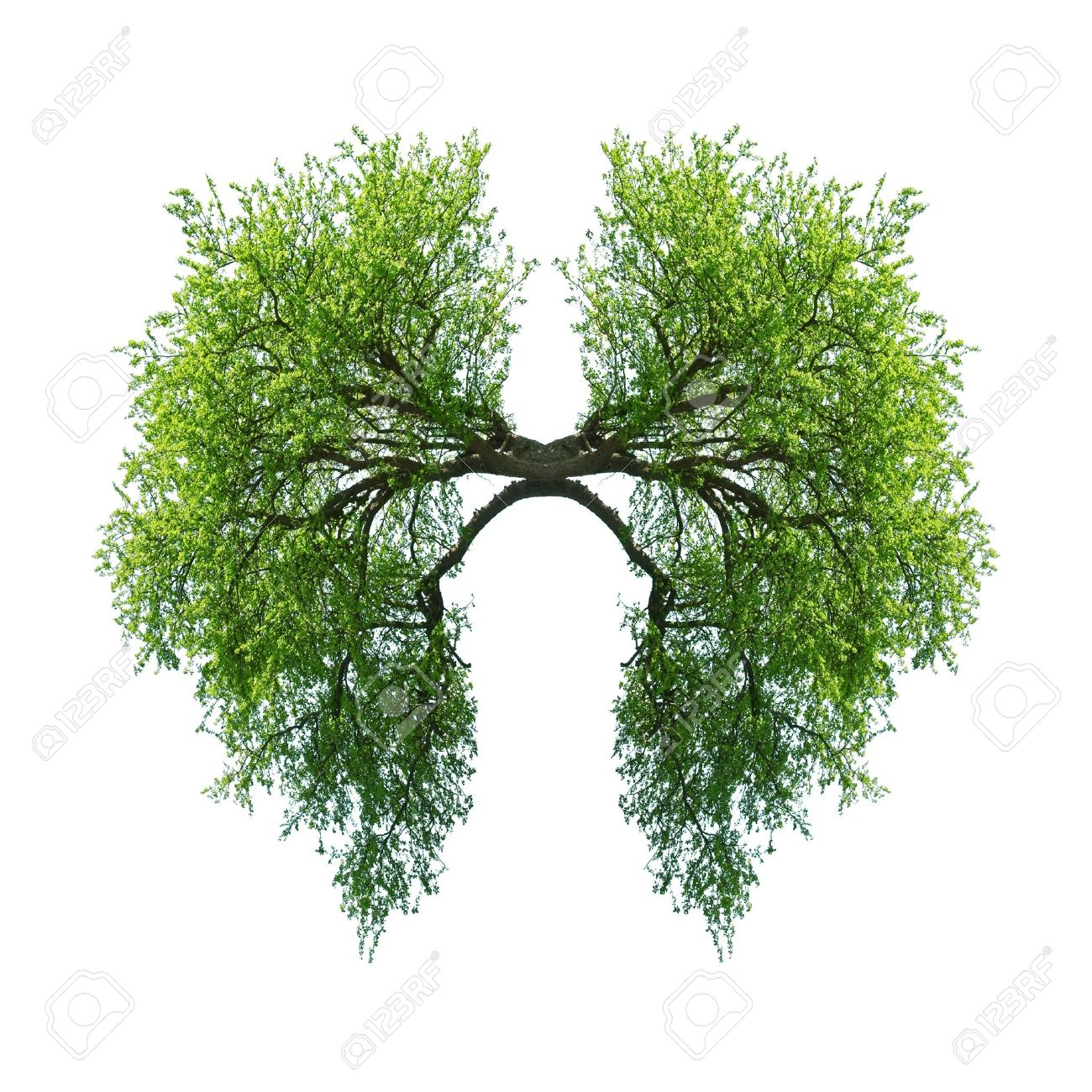 green tree lungs isolated on white Standard-Bild - 19721054