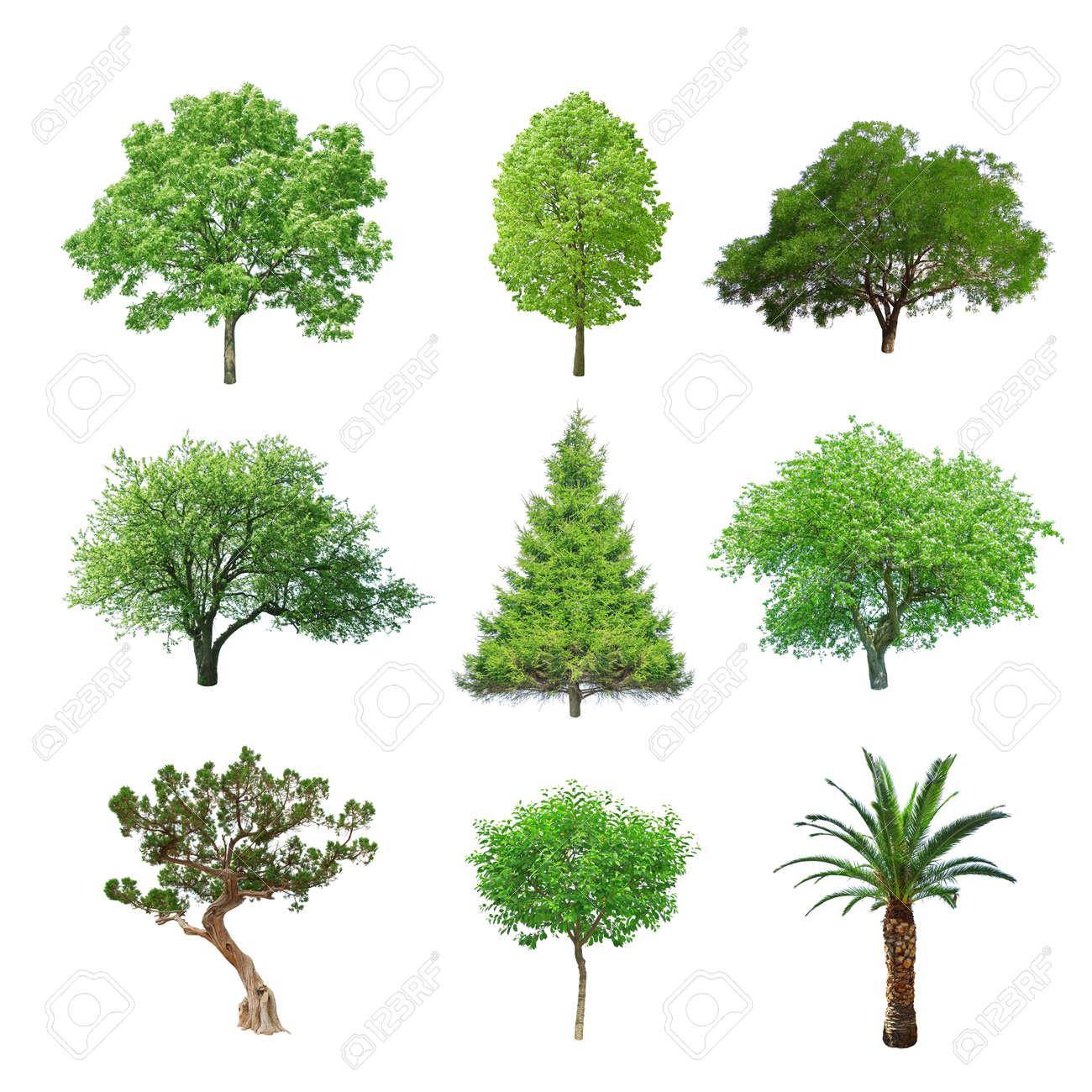 verschiedene Baum-Set isoliert auf weiß Standard-Bild - 19721199