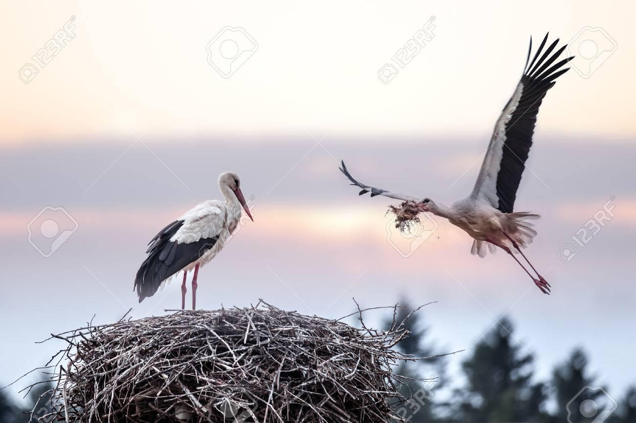 two stork on nest closeup - 25818564