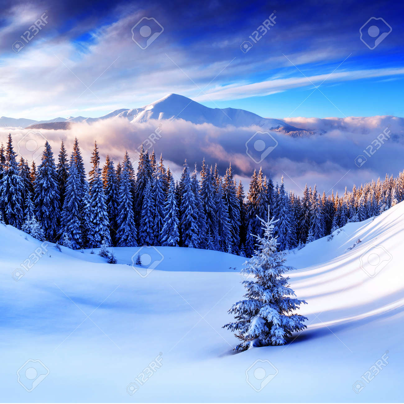 snovy trees on winter mountains - 33008591