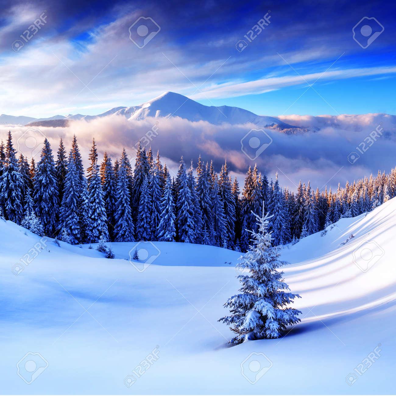snovy trees on winter mountains Standard-Bild - 33008591