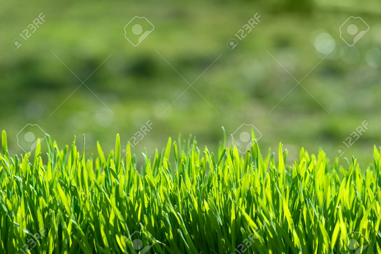 green grass on green background Standard-Bild - 44572116