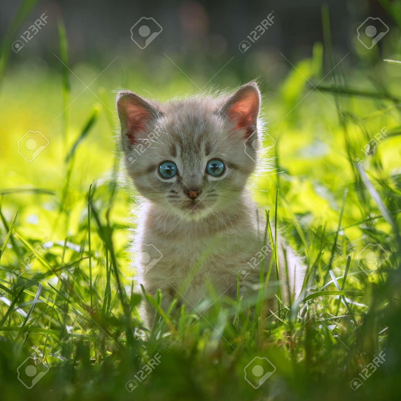 kitten on grass close up Standard-Bild - 46070332