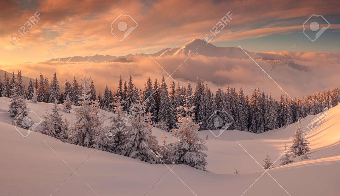 Fantastic orange evening landscape glowing by sunlight. Dramatic wintry scene with snowy trees. Kukul ridge, Carpathians, Ukraine, Europe. Merry Christmas! - 48079568