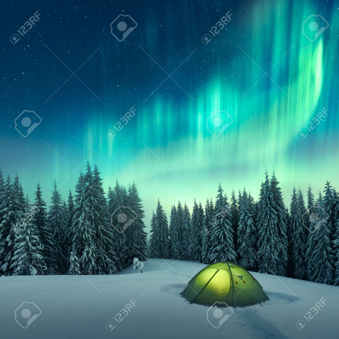 Aurora borealis  Northern lights in winter forest  Sky with polar