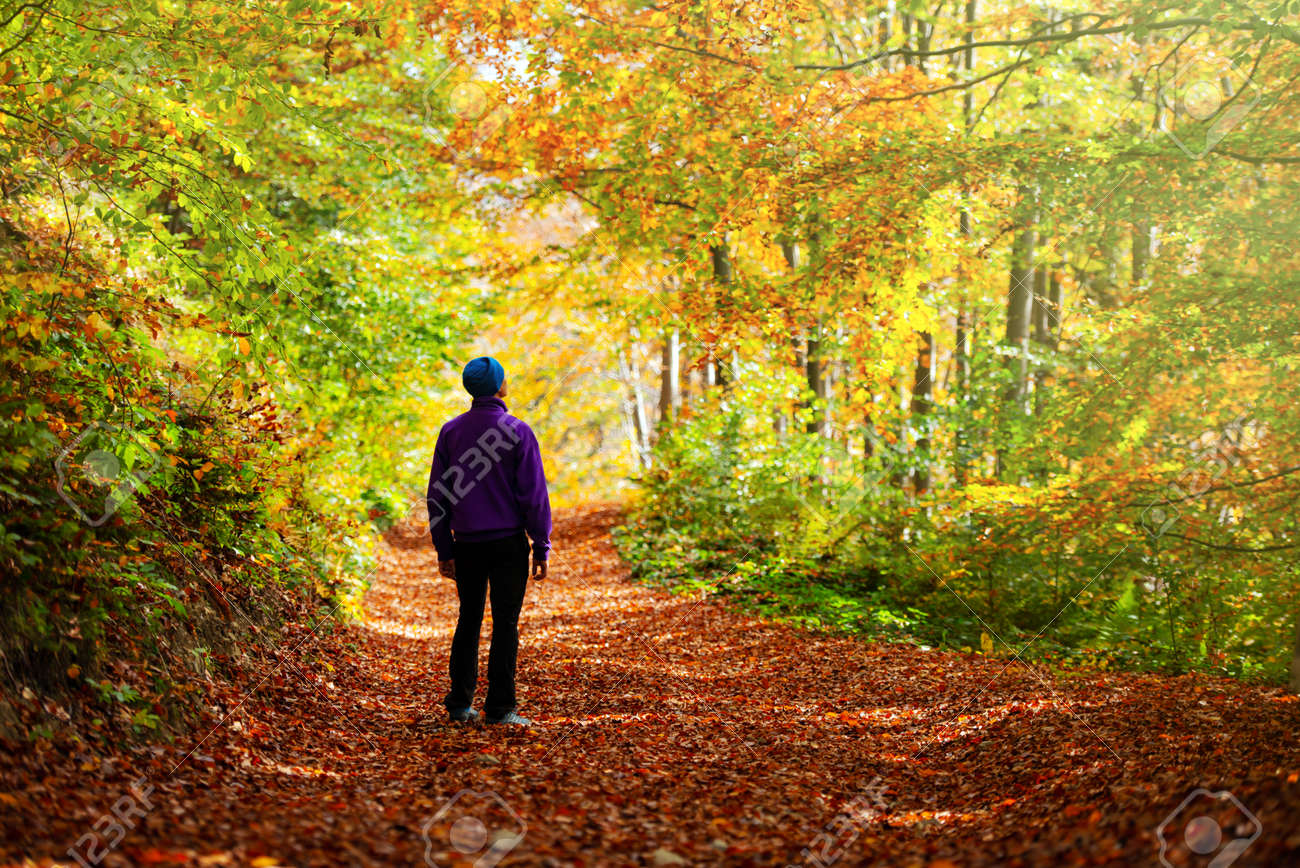 Man walking in autumn forest with orange trees. Landscape photography - 142390654