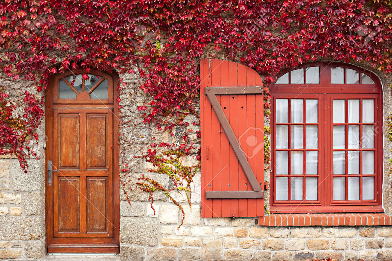 red autumn vine climbing traditional granite house, brittany Stock Photo - 5605310