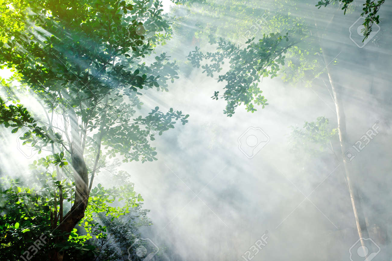 morning sunbeam in tropical fairy forest with smoke, ko laoliang island, thailand Stock Photo - 9505088