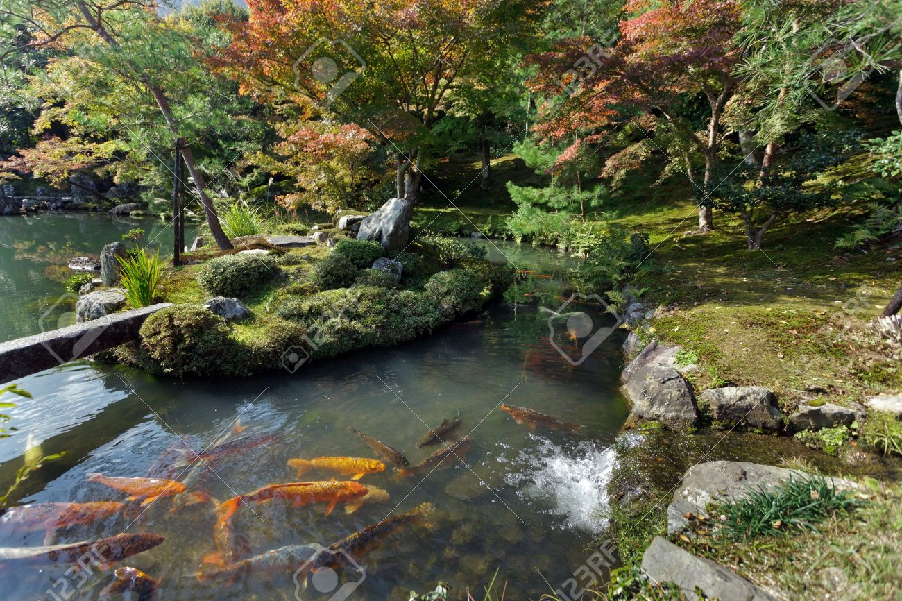 tenryuji temple zen garden with koi carps kyoto japan stock photo 12818363
