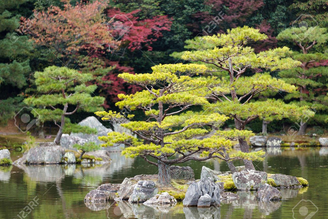 Japanese zen gardens with pond - Japanese Zen Garden In Kinkakuji Temple Park Kyoto Stock Photo 12946295