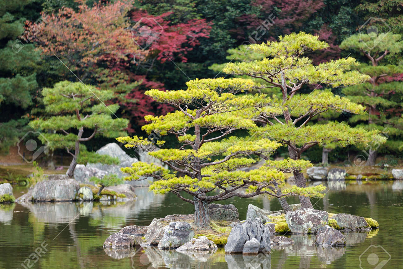 foto de archivo jardn japons zen en el templo de kinkakuji parque kyoto