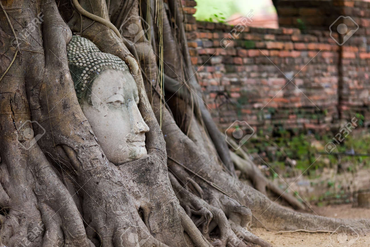 Buddha Head Entangled In Fig Tree Roots In Ayutthaya, Thailand ...