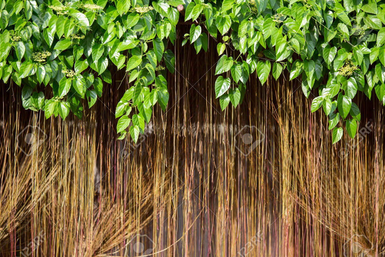 decorative vines background in a tropical garden stock photo