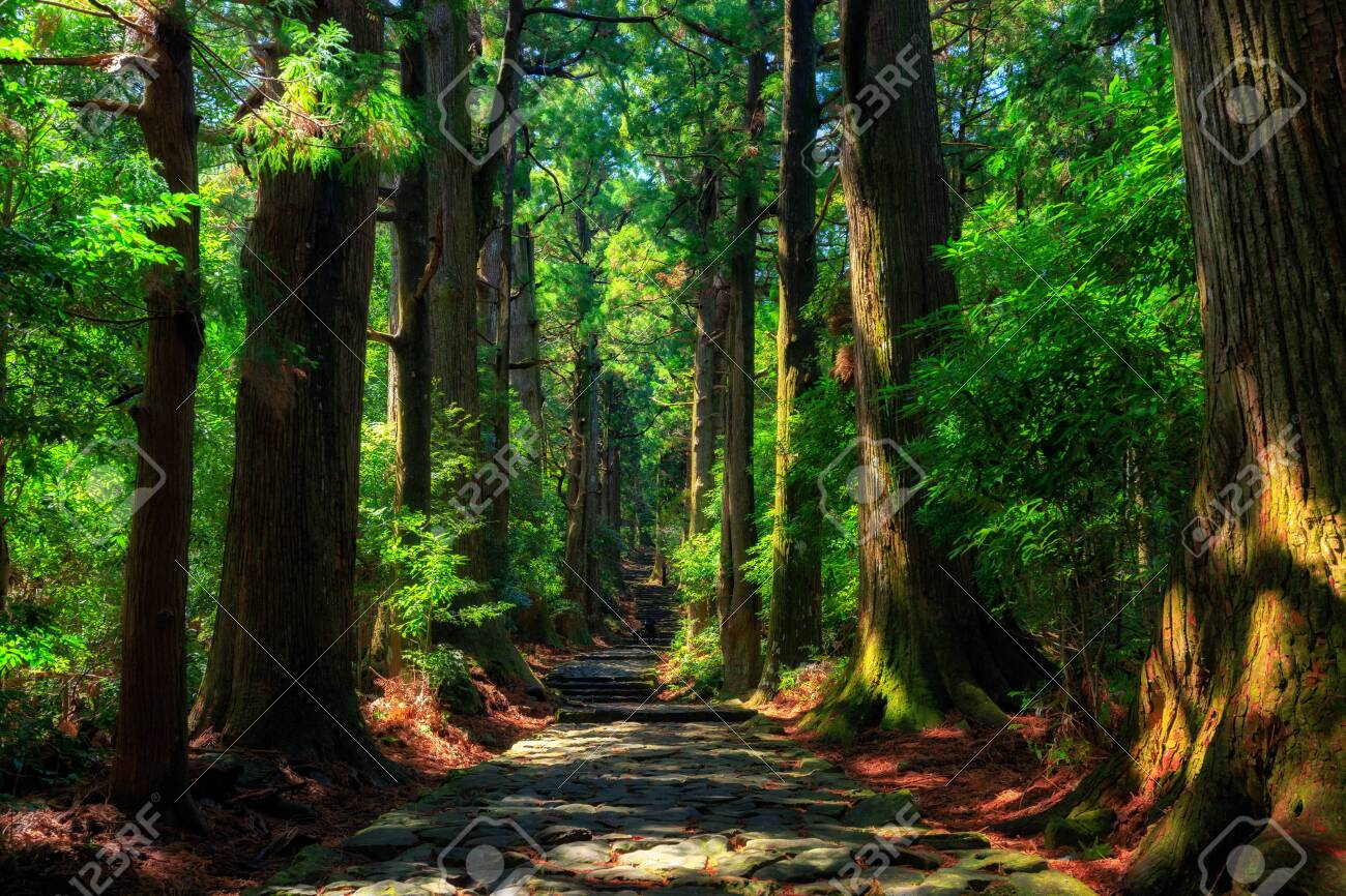 Beautiful and old cypress forest at Daimonzaka, Japan - 126666006