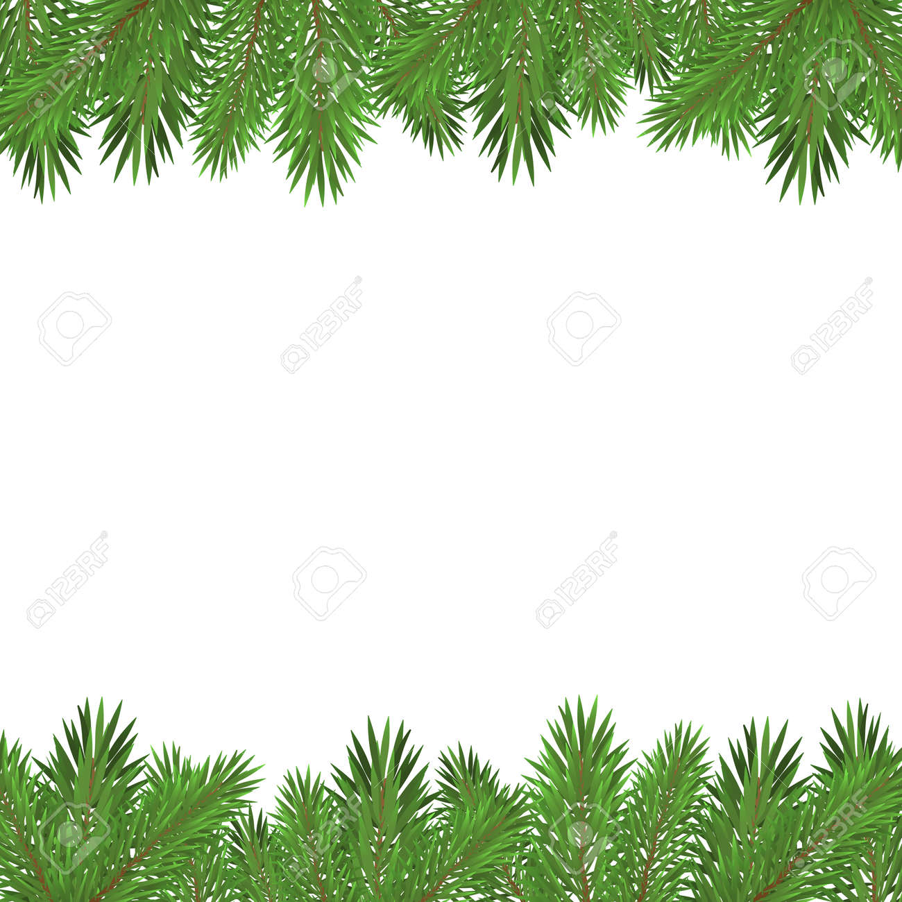 Green christmas tree branches isolated on white background. - 137245880