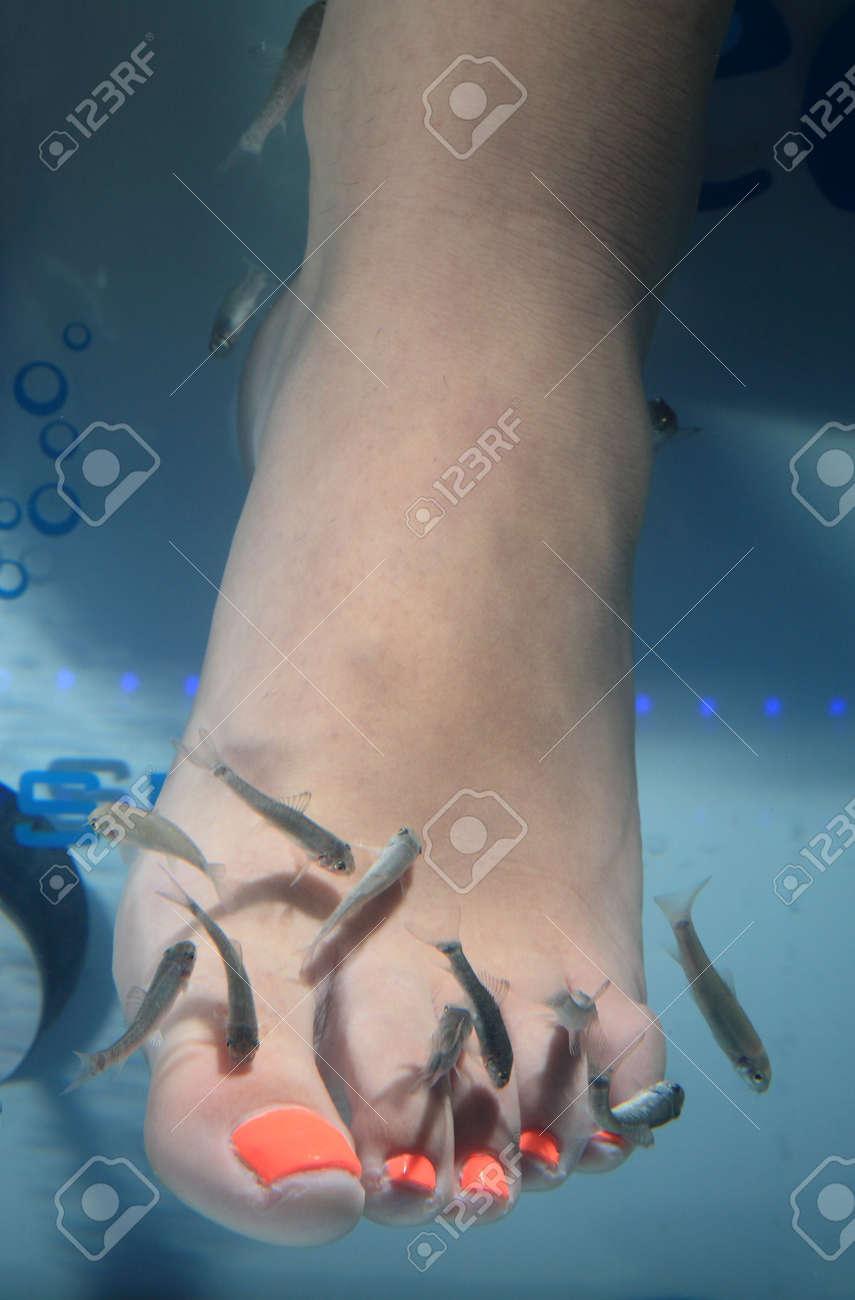 close-up of feet taking care at fish spa Stock Photo - 14945793