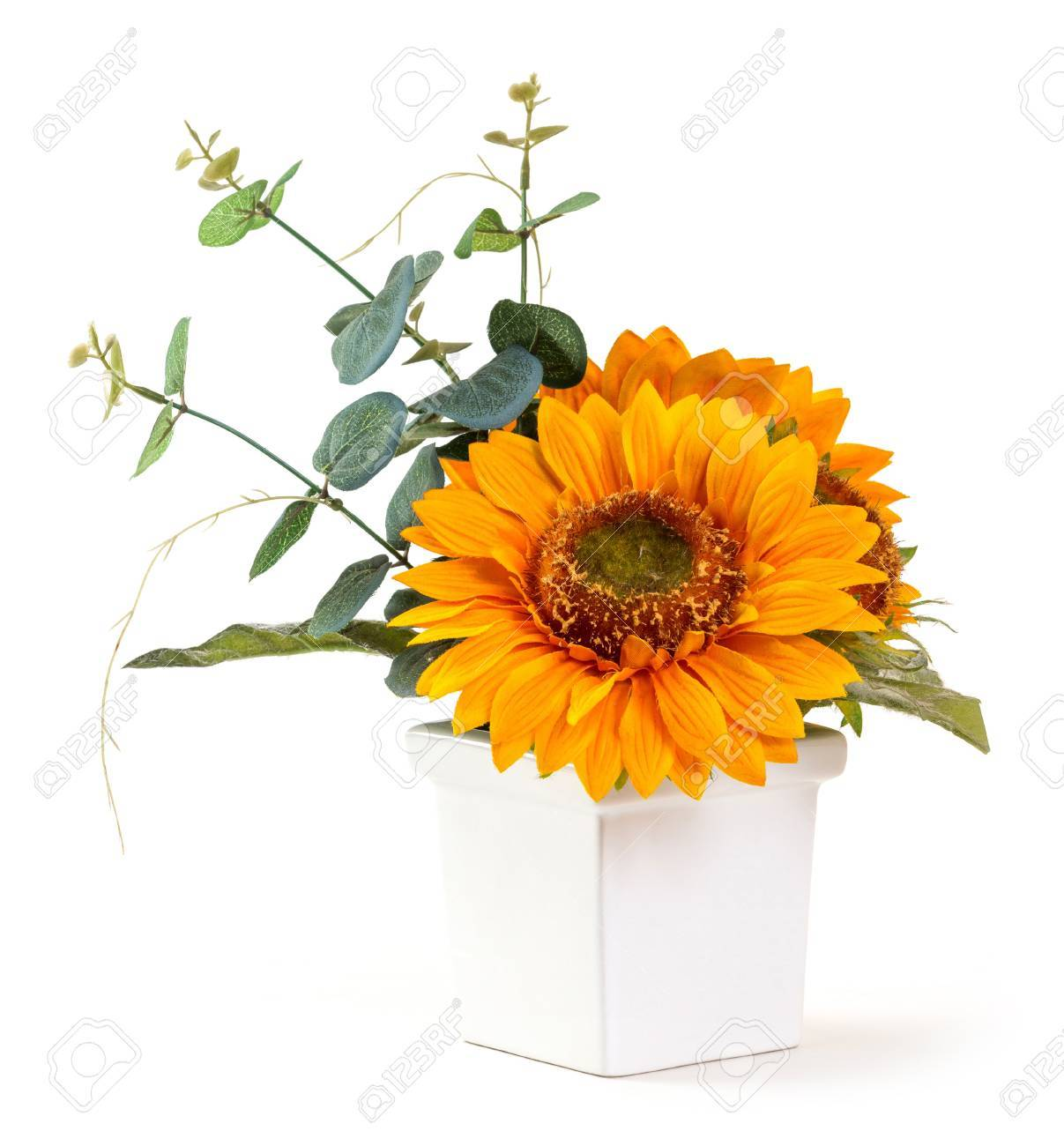 Bouquet Of Sunflower And Eucalyptus Branch In Ceramic Pot Isolated Stock Photo Picture And Royalty Free Image Image 20730523