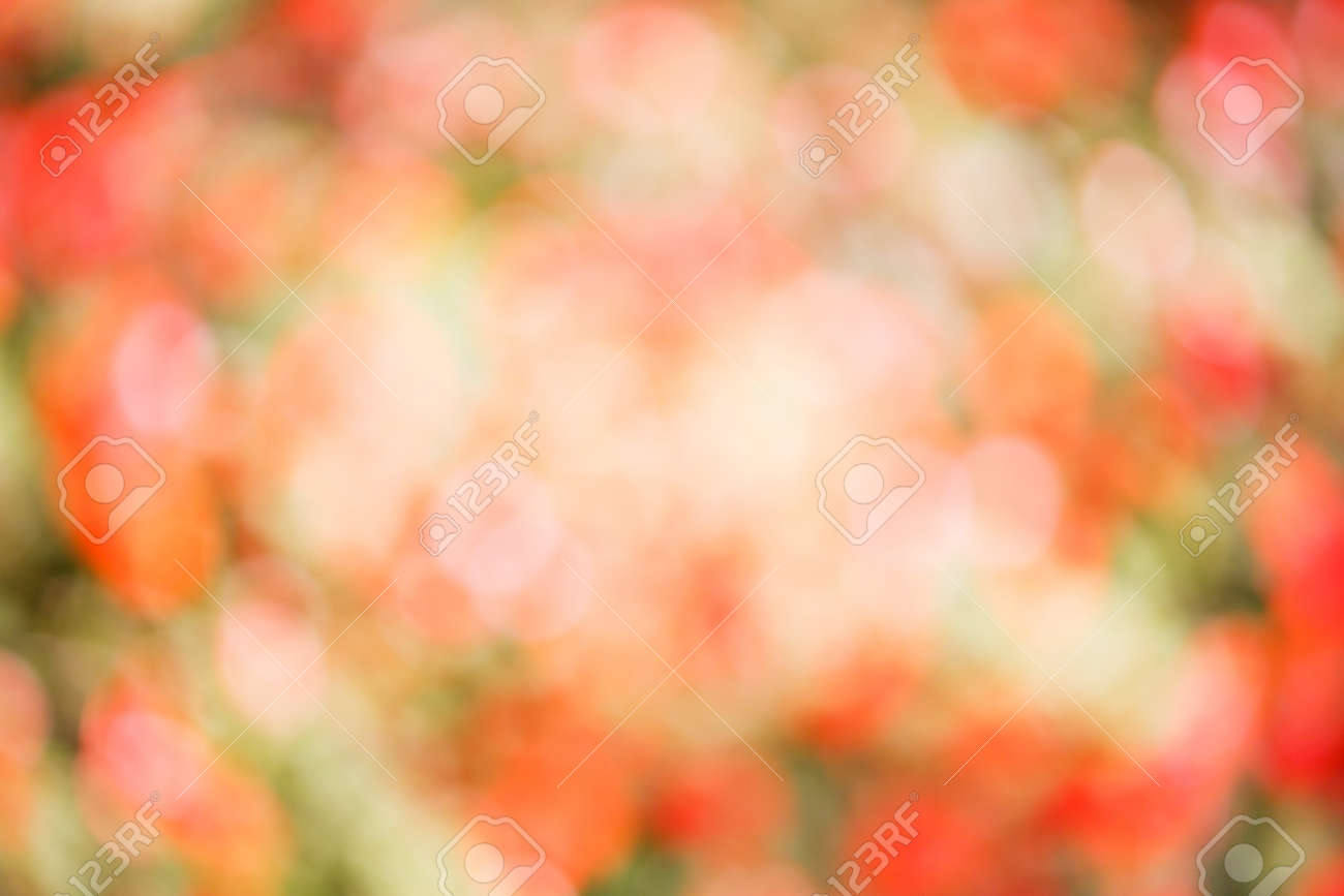 Colorful real nature blurred background from flower garden