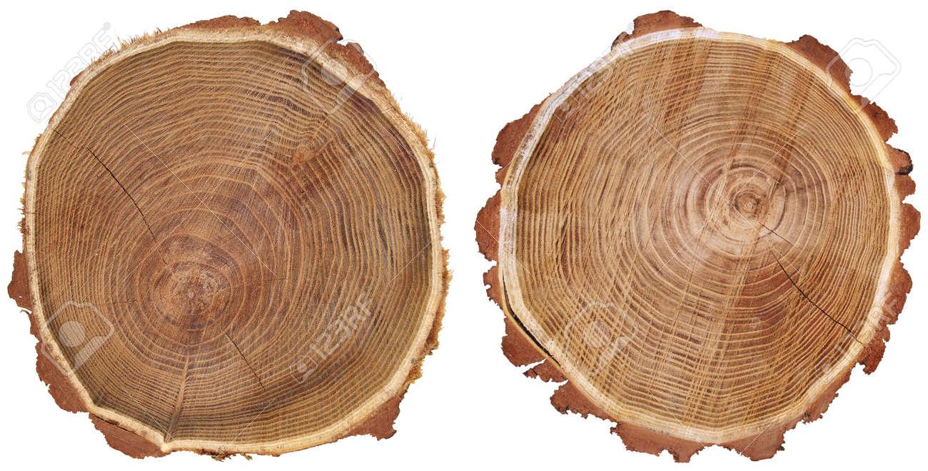 Atemberaubend Querschnitt Der Baumstamm Auf Weißem Hintergrund Lizenzfreie Fotos #YD_47