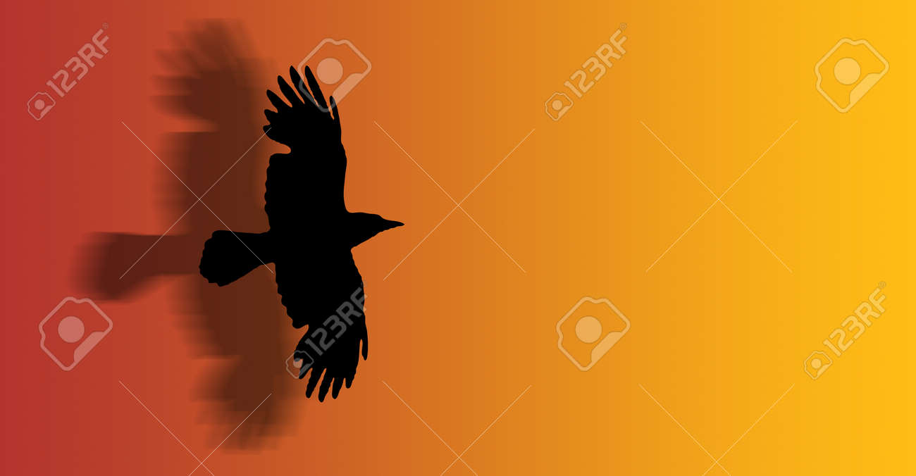a hawk flying with open wings - silhouette - illustration Stock Photo - 1366125