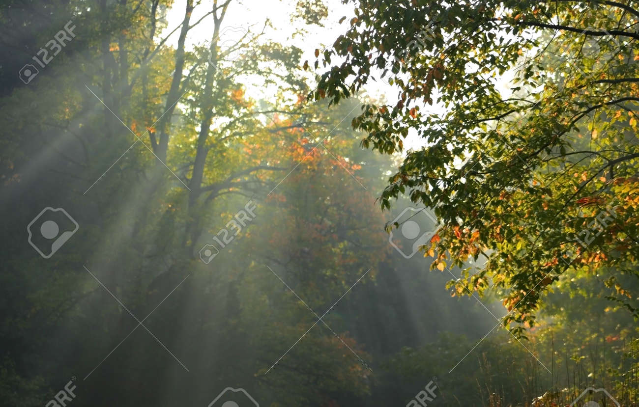 Morning sun light rays Stock Photo - 1921606