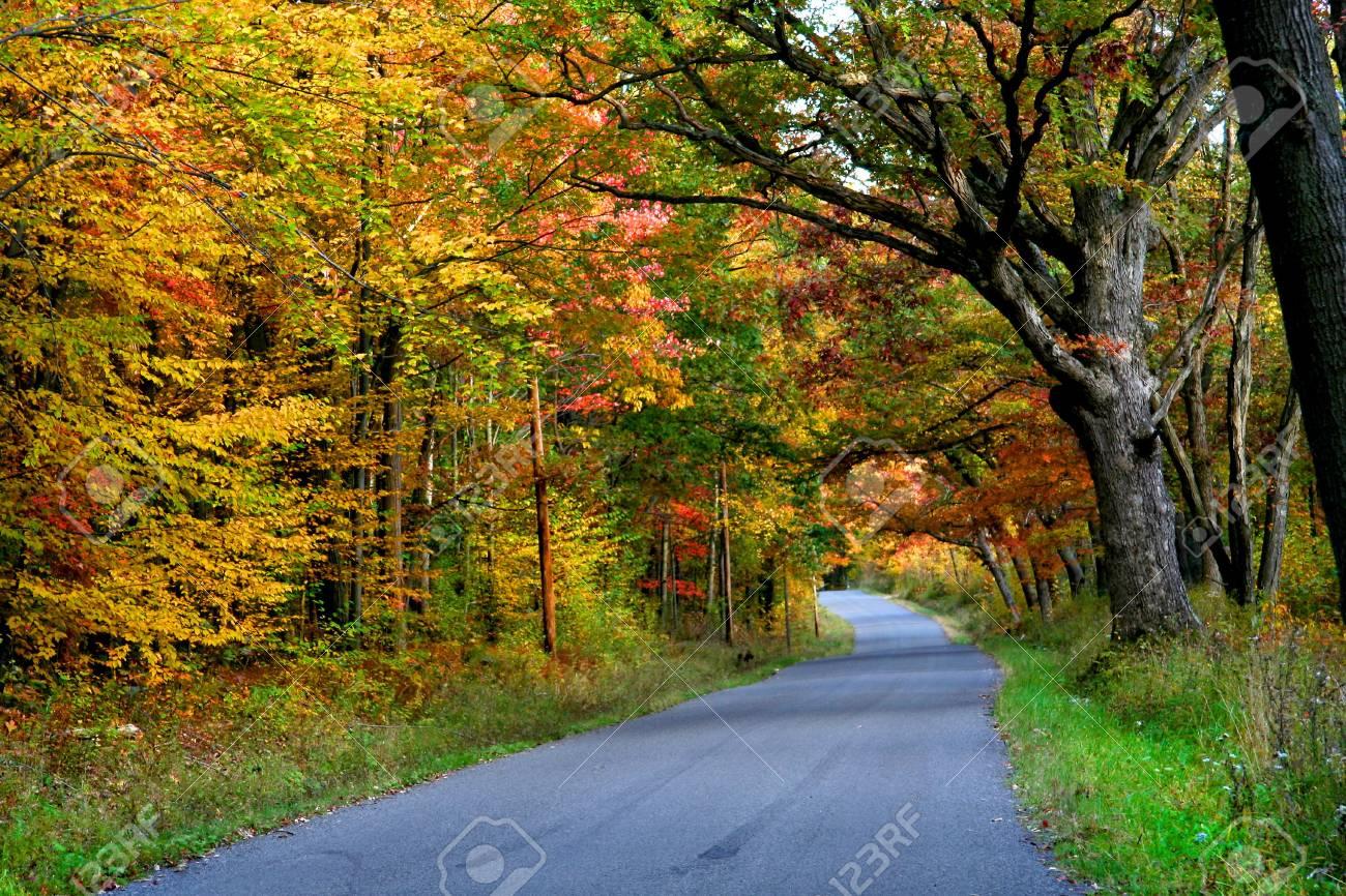 Autumn drive Stock Photo - 5579751