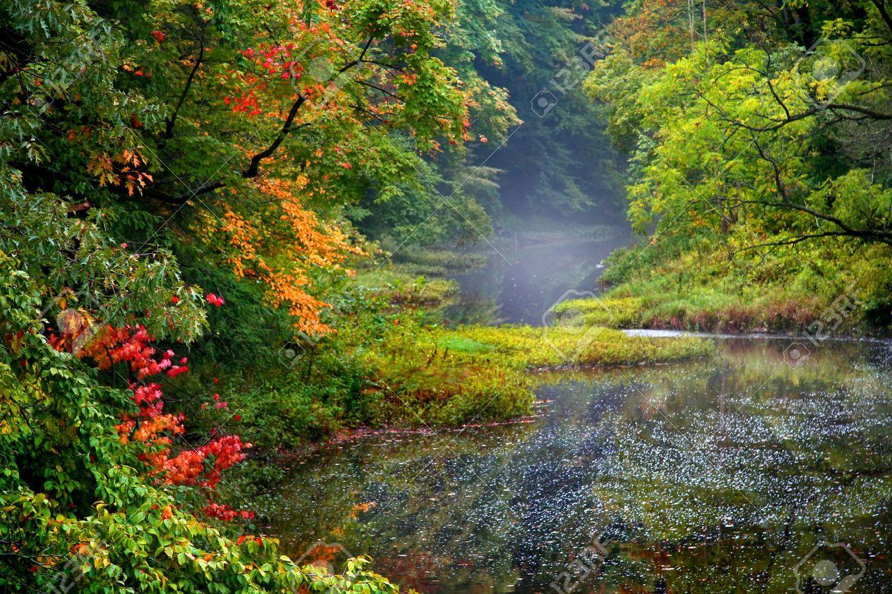 Misty autumn landscape - 7981788