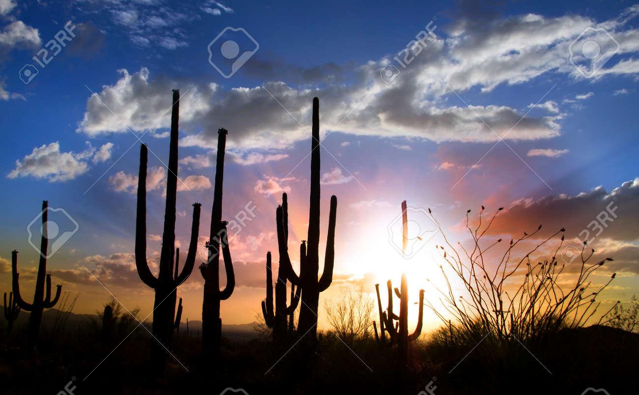 Sun set and Saguaro cactus in Saguaro national park Stock Photo - 10539764
