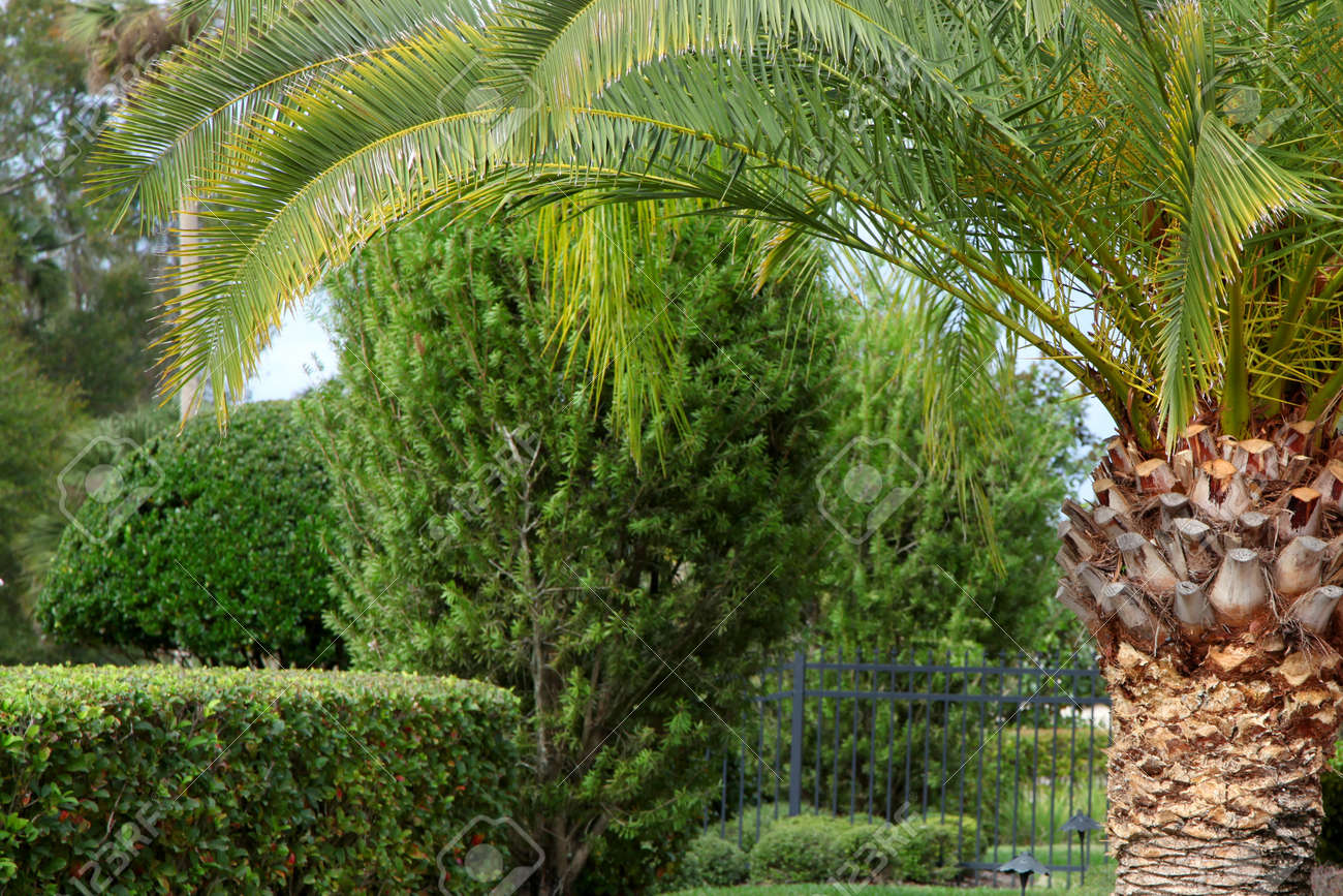 Lush green trees and Palm tree in a garden Stock Photo - 11868568