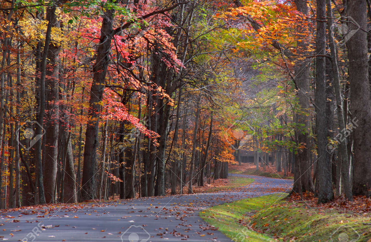 Colorful trees by the road in Babcock state park Stock Photo - 13311890