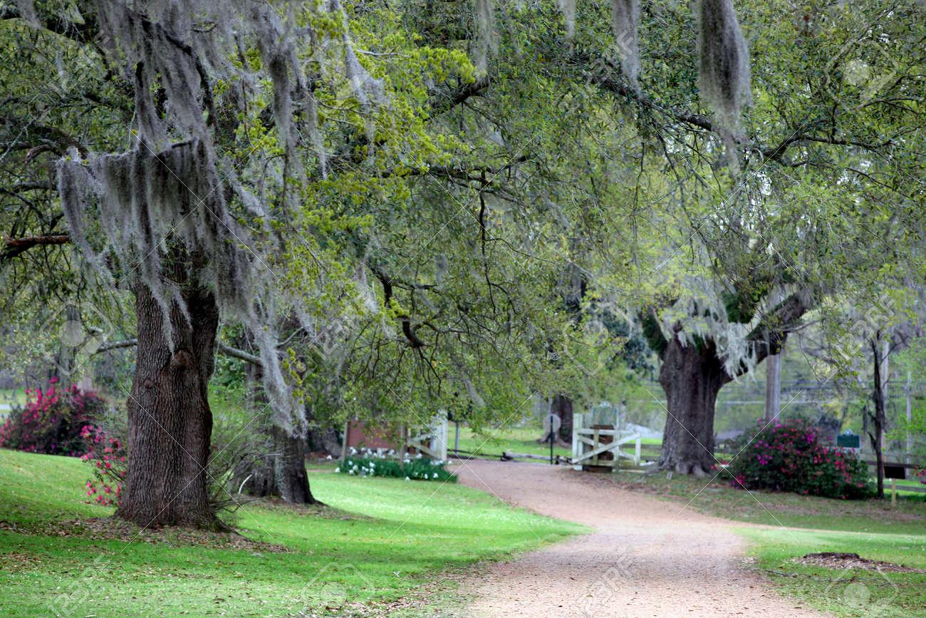 Beautiful landscape of lush green Cypress trees - 14296489