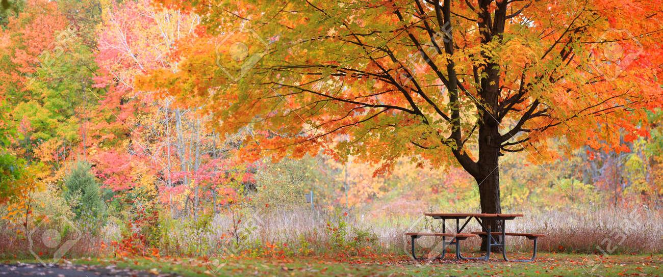 Relaxing autumn scene - 22172510