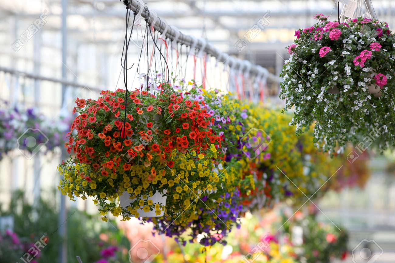 Hanging flower pots in the nursery - 24804319