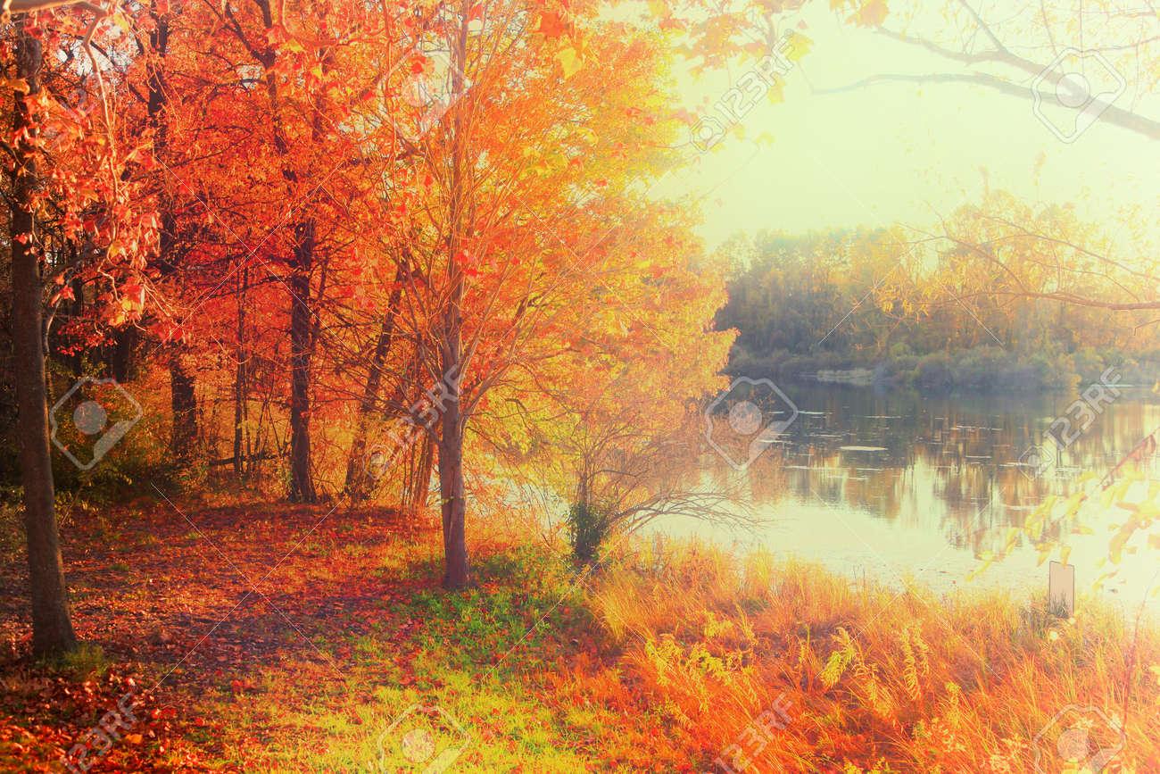 Fall foliage by the lake - 85627922