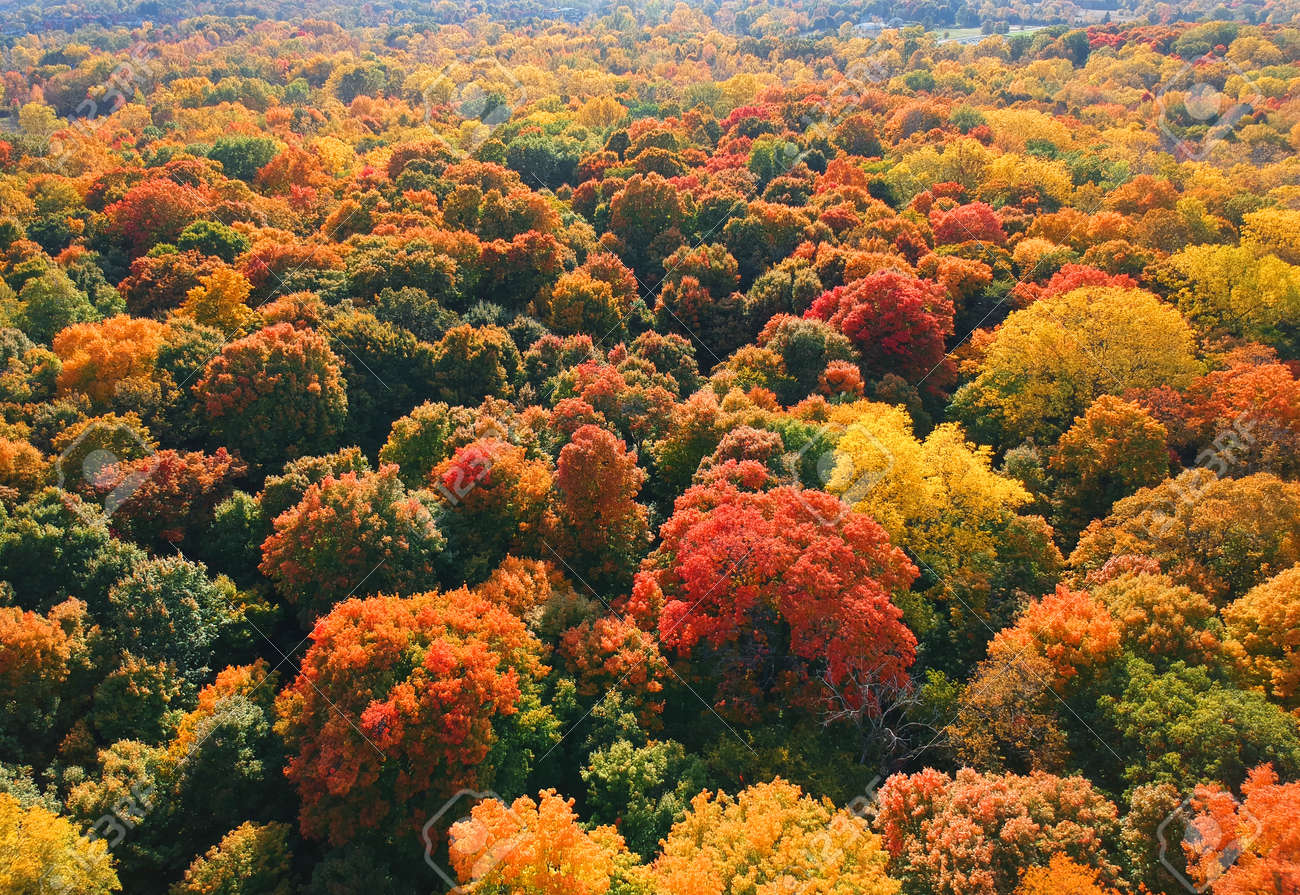 Aerial view of colorful autumn trees in rural Michigan - 163916595