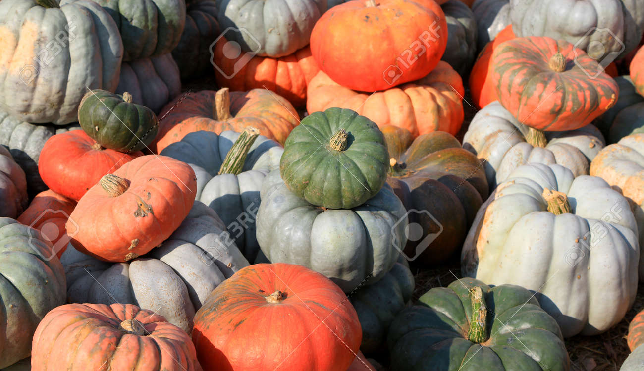 Close up shot of pumpkins fresh from farm - 163916602