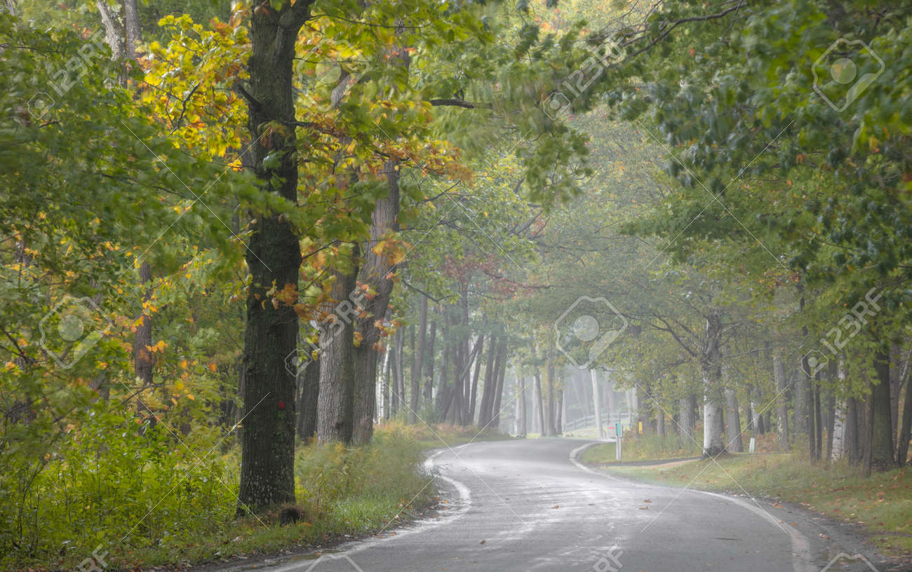 Tunnel of trees along scenic byway 119 near Harbor springs, Michigan on a misty autumn day. - 164161305
