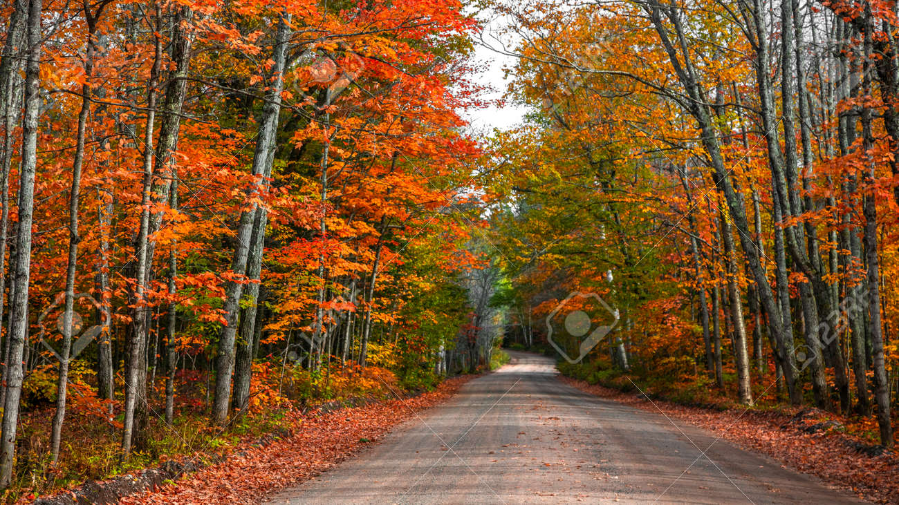Colorful autumn trees by the forest road in Michigan upper peninsula countryside - 163023961